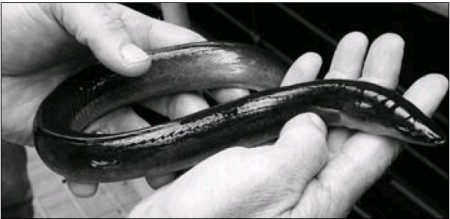 free download woman and eel video sex